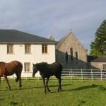 Kilmacud horses
